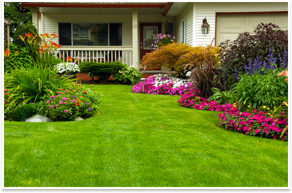 Fertilized lawn image