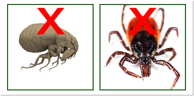 Fleas, and Ticks
